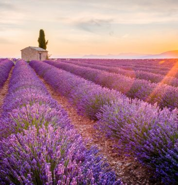Lavender fields | Charming hotel in Provence